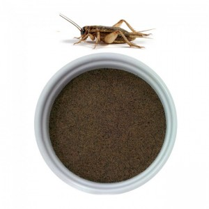 cricket powder flour